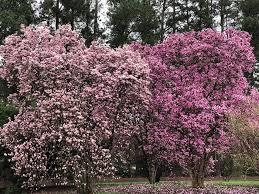 Botanical Gardens South Carolina South Carolina Botanical Garden Home