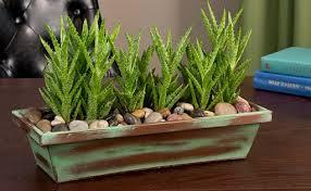 live indoor plants six easy indoor plants frankie flowers grow eat live outdoors