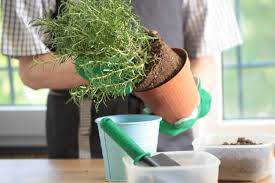 create your own indoor garden with these tips