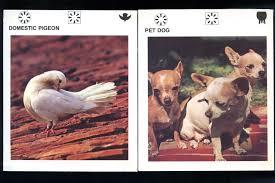 wildlife treasury cards wildlife cards center for postnatural history
