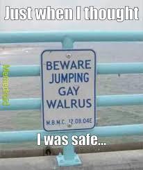 Walrus Meme - gay walruses meme by dopic memedroid