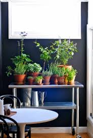 inside herb garden indoor herb garden with terracotta pots easy start to grow
