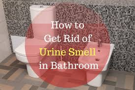 How Do You Get The Urine Smell Out Of Carpet How To Get Rid Of Urine Smell In Bathroom Xion Lab