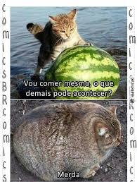Gato Meme - gato melancia gatancia memes hu3 br amino