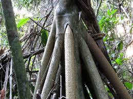 Adaptations Of Tropical Rainforest Plants - flashcards tropical rainforest plants list u0026 flashcards study com