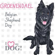 belgian sheepdog groenendael puppies clipart