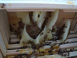 how to avoid crosscomb in top bar langstroth hives beekeeping
