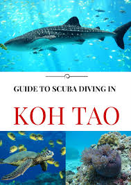 koh tao diving useful tips to get your scuba licence now keep