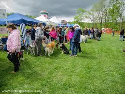arctic spirit rescue blog northern breed dog news u0026 education