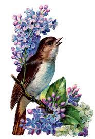 best 25 vintage birds ideas on pinterest bird prints vintage