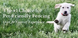 dog fence best friend fence dog fence diy dog fencing systems