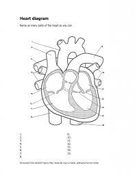 blank heart diagram human anatomy library