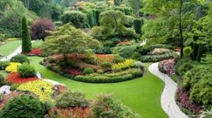 Bushes For Landscaping Evergreen Plants For Landscaping Landscaping Plants Choosing