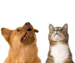 pet dangers hidden in the medicine cabinet morris animal inn