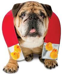 Dog Costume Halloween 50 Adorable Halloween Dog Costumes Vittles Vault