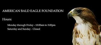 american bald eagle foundation home