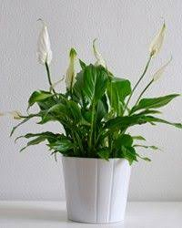 20 gorgeous house plants that can take full shade plants house