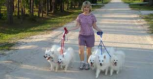 american eskimo dog what do they eat training u0026 behavior tips
