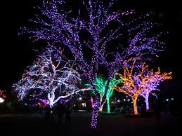 Zoo Lights Phx by Snaps U2013 Glenrosa Journeys