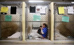 black friday in tucson pima animal center offers free black friday adoptions local news
