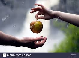 eve picked the forbidden fruit and gives the apple to adam stock