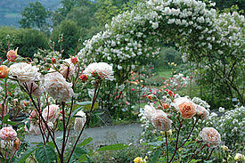 Pictures Of Gardens And Flowers Flower Garden Wikipedia