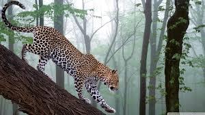 forest jungle animals