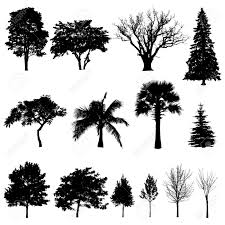 evergreen tree silhouette search shapes line