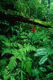 native plants in the amazon rainforest best 25 tropical rain forest ideas on pinterest tropical forest