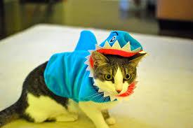 Cat Costumes Halloween 10 Creative Cat Costumes Purrrfect Halloween