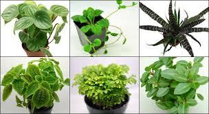 neherp vivarium plant kits