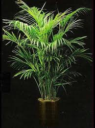 Indoor House Plants Low Light Indoor Plants Gallery The Potted Plant Scottsdale Interior