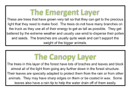 rainforest display materials by dazayling teaching resources tes