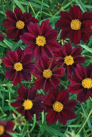 perennial garden vegetables 51 best perennial flowers images on pinterest flower gardening