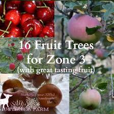 16 fruit trees for zone 3 with great tasting fruit joybilee farm