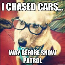 Hipster Dog Meme - very fitting for my dogs trygg loves to chase anything with wheels