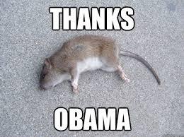 Rat Meme - thanks obama dead rat quickmeme