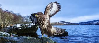 wildlife images Loch visions wildlife photography workshops in scotland jpg