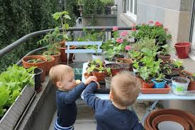 balcony gardening with toddlers zurigrow