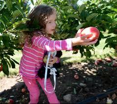 fall fun photos share your apple pumpkin pickin u0027 pictures news