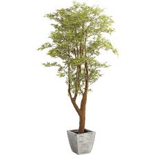 trees plants artificial trees boxwoods more pier 1 imports