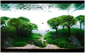amano aquascape takashi amano aquascape aquascaping aquarium