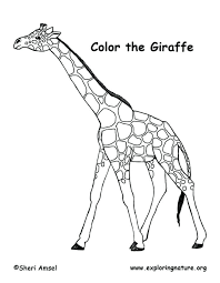 Giraffe Coloring Pages Giraffe Pictures To Color Giraffe Coloring Pages Giraffe Coloring by Giraffe Coloring Pages