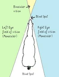 the equine eye monocular vs binocular vision and focus issues