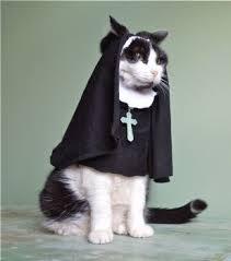 Halloween Costumes Cats Wear Halloween Hail Mary