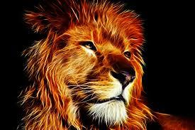 lion king megaossa deviantart