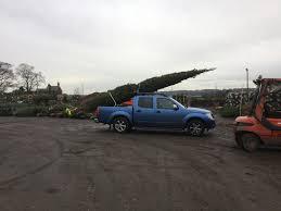 merseyside u0027s home grown christmas tree farm liverpool echo
