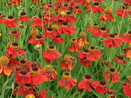 perennial flower garden design plans mailbox bed ideas flowers