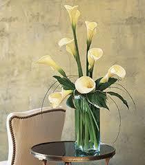 calla lillies calla lilies albuquerque white calla albuquerque calla