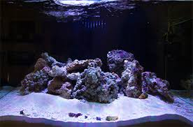 Marine Aquascaping Techniques What U0027s Your Aquascaping Rock Of Choice Reefs Com